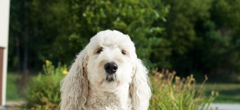 Creative Pet Features to Include in Your Home